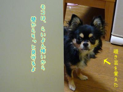 モコは、らいよん怖いから壁からそっと見守るよ
