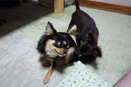モコ&チョコ