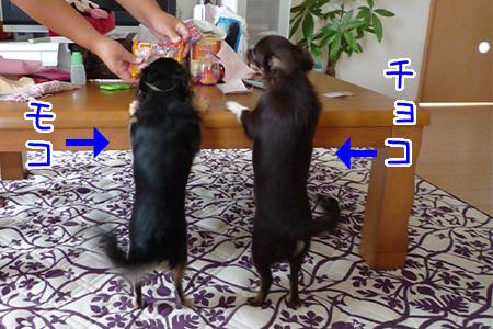 モコとチョコちゃんの比較