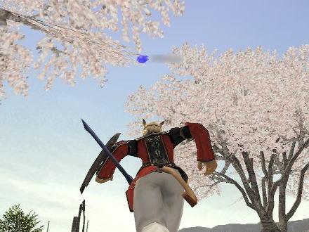 メインは桜!