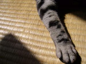 猫手の日光浴