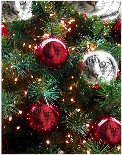 しまのクリスマス