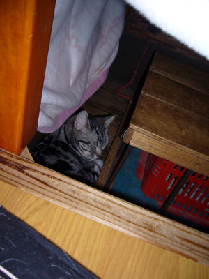しまの寝床