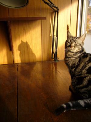 夕方の影猫