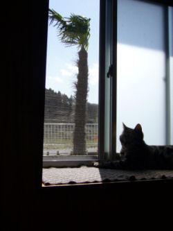出窓、南国風