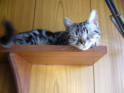 猫棚の上。
