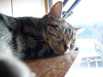 猫棚でお昼寝