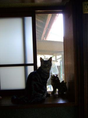 出窓はしまのものデス