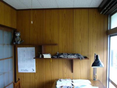 猫棚の昼寝2