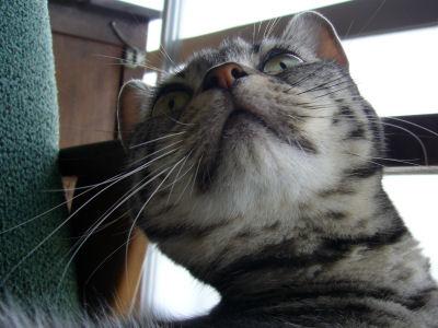ちょっと別猫