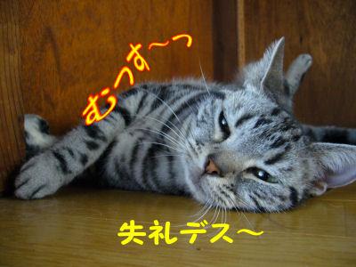 失礼な!(?)