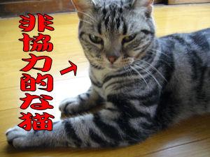 非協力的な猫