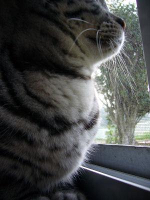 ハト胸の猫2
