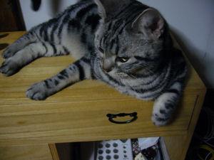 タンス猫2