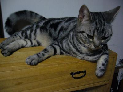 タンス猫3