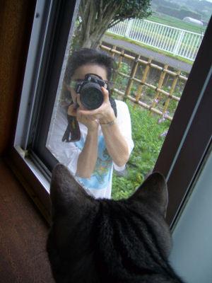 しまを撮るしまねこ