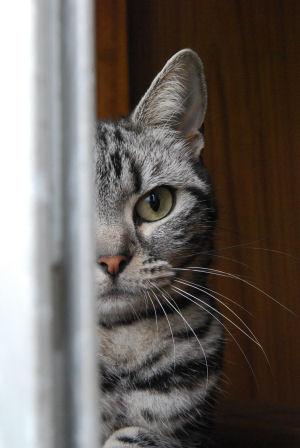 のぞかれる猫