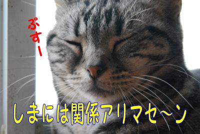 関係なしの猫
