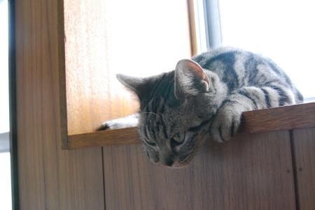 たれてる猫