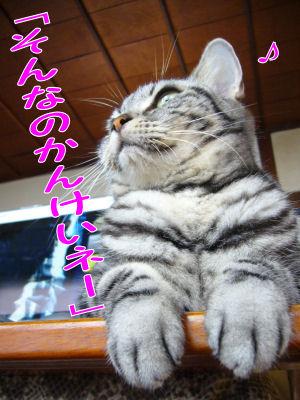 関係ない猫