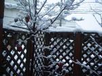 初雪風景①