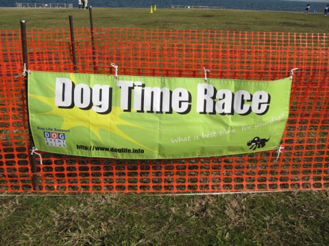Dog Time Race