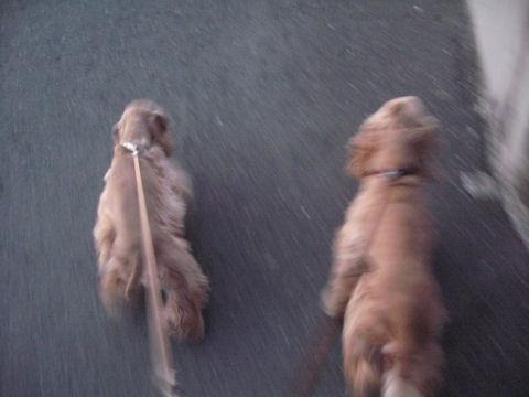 散歩(散走?)