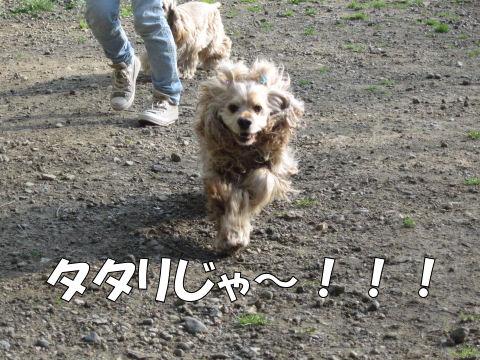 タタリじゃー!!!