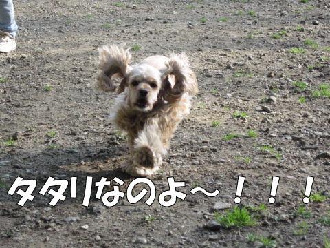 タタリなのよ~!!!
