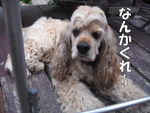 IMG_1688_480.jpg