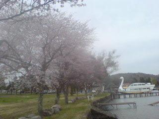 20090424 伝九郎横の桜