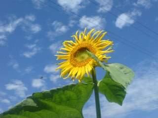 20090815 夏の花