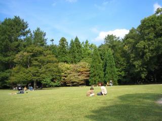 植物園芝生2