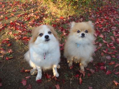 2008.11.14 秋のもも&ケン