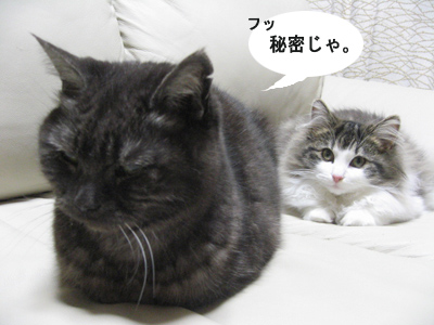 ドロボー猫の座IMG_8780