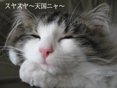 快適睡眠IMG_9076