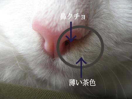 鼻クソ解説IMG_9084