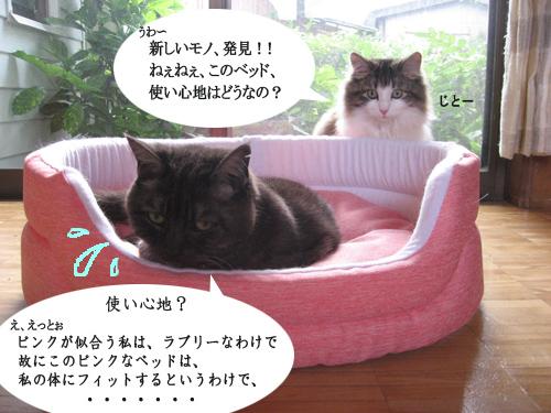 4-1IMG_0986.jpg