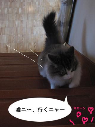 6IMG_0430.jpg