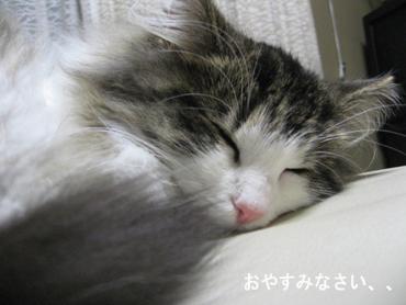 IMG_8140.jpg