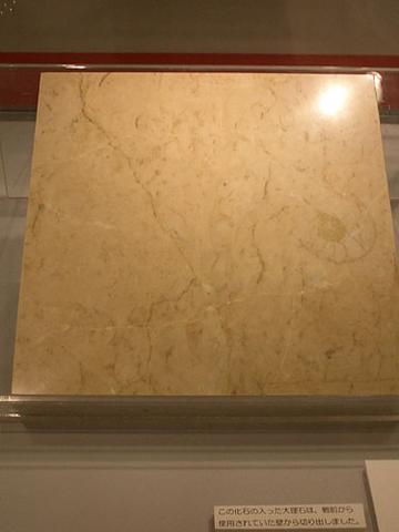 アンモナイトの化石入り大理石
