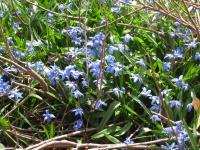 blue+flowers_convert_20090424104447.jpg