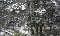 本沢温泉 日本の秘湯