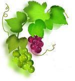 grape-L.jpg