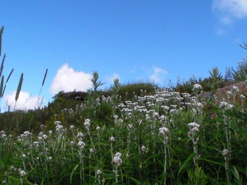 志賀高原も命の季節