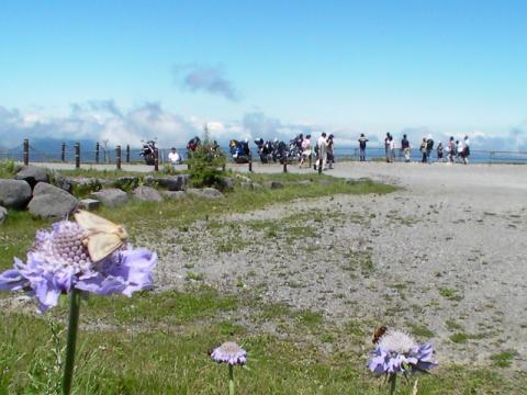 高山植物と群がる虫たち