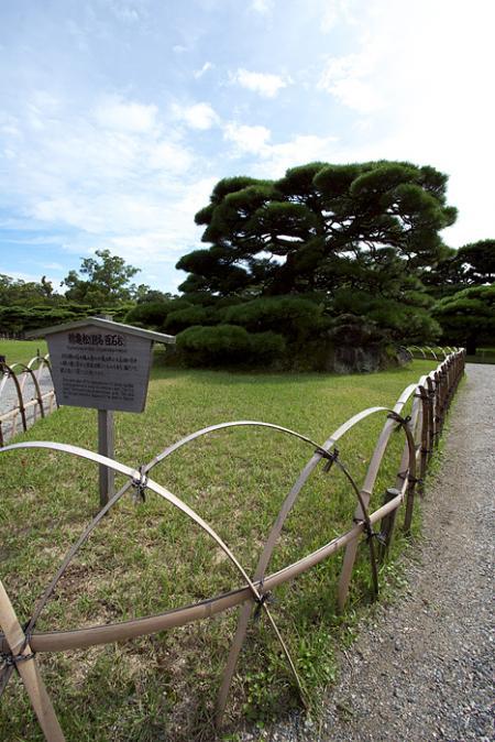 鶴亀松(別名『百石松』)