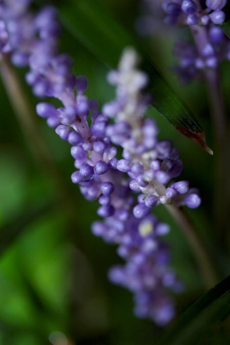栗林公園の花