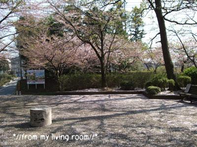 20090411sakura2.jpg