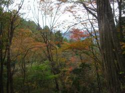 大岳山紅葉